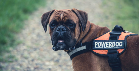 Do you need a service animal policy?